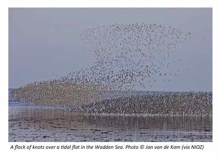 Discover a Protected Area: The Wadden Sea (The Netherlands)