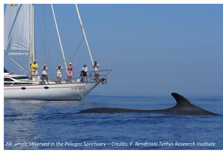 A storyline: Pelagos, a Cetaceans Sanctuary in the Mediterranean Sea