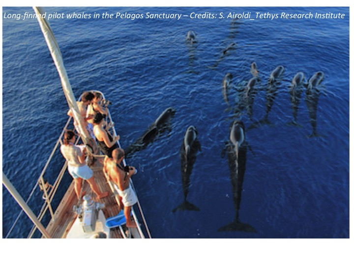 Discover a Protected Area: The Mediterranean Large Marine Ecosystem and the Pelagos Sanctuary for Marine Mammals