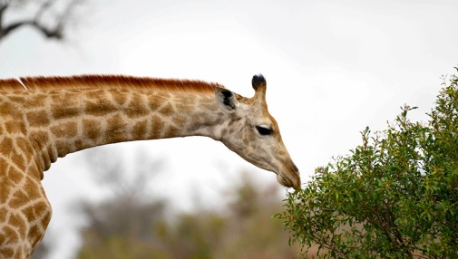 Ecopotential Storyline: Savanna dynamics at Kruger National Park