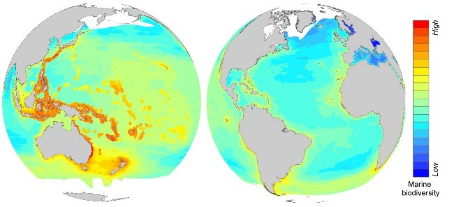 Turning up the heat on global hotspots of marine biodiversity