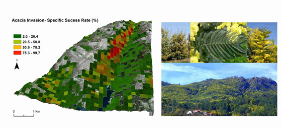 Estimating invasion of non native trees with satellite data in Protected Areas