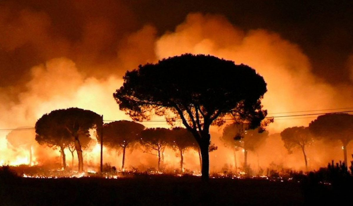 Fires: A New Study Using Seasonal Predictions